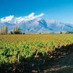 Cùng rượu vang Minh Phương tìm hiểu về rượu vang Chile cao cấp