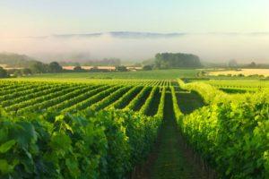 Các chủng loại của rượu vang Pháp