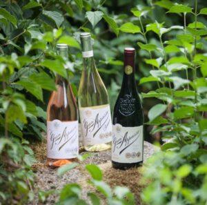 Tìm hiểu những điều chưa biết về rượu vang cùng rượu vang Minh Phương (P3)